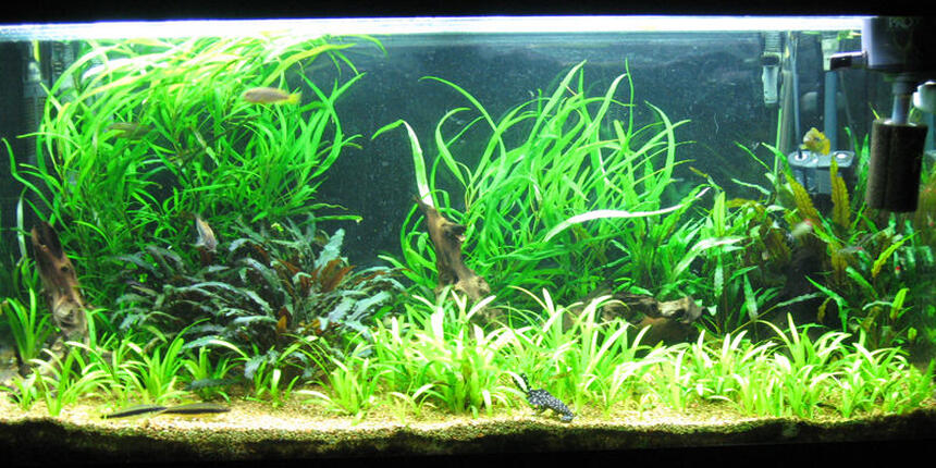 Rated #35: 86 Gallons Planted Tank - Aquatic Delight.