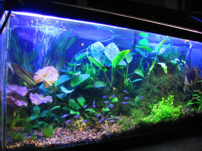 Rated #22: 100 Gallons Planted Tank - 30 gallon