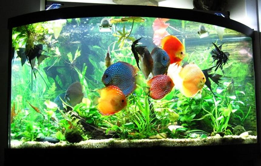 Rated #26: 96 Gallons Planted Tank - Planted Discus Tank 96 gallons