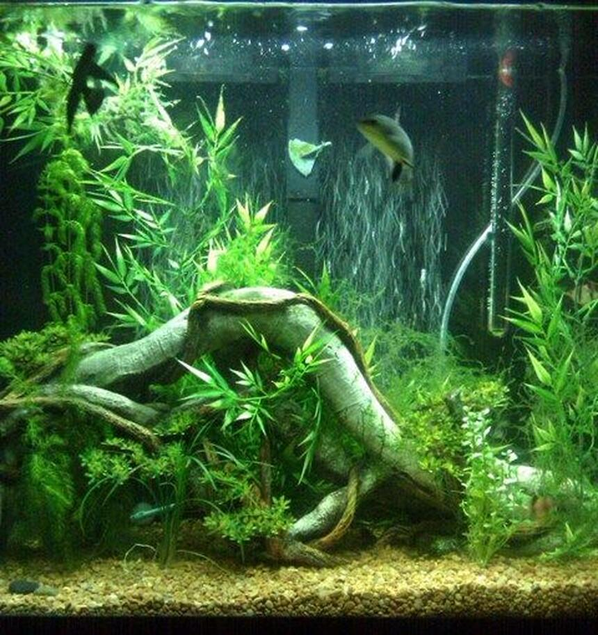 Rated #38: 40 Gallons Planted Tank - just started adding live plants