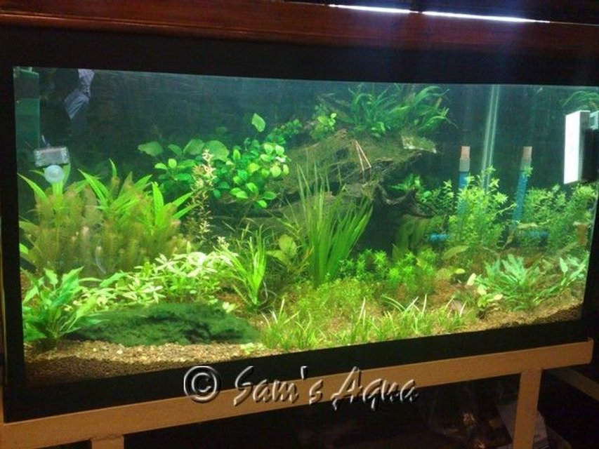 Rated #55: 12 Gallons Planted Tank - my 4 feet planted tank