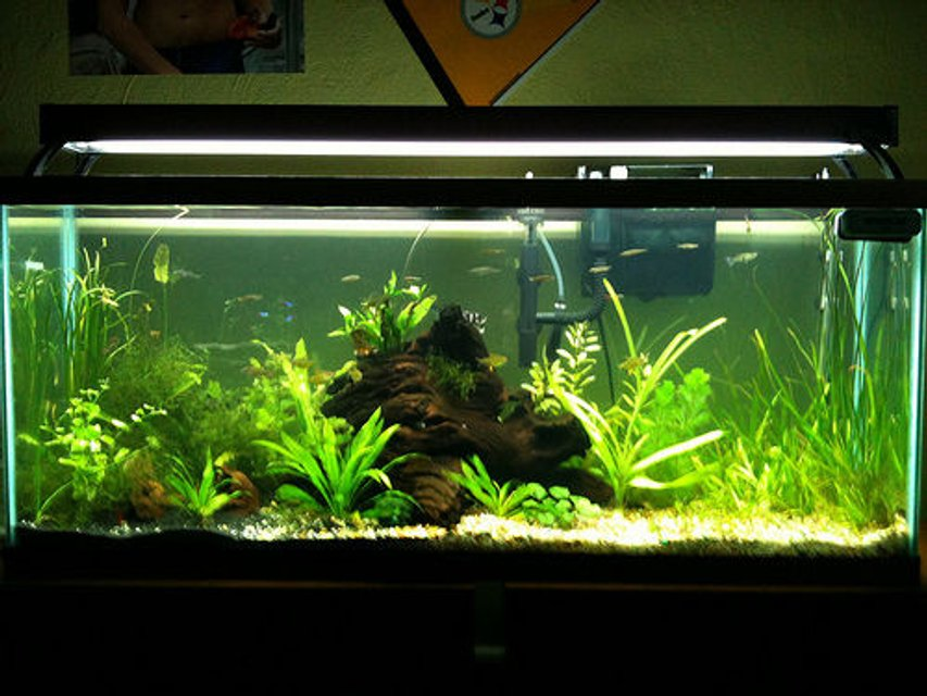 Rated #58: 55 Gallons Planted Tank - 55 gallon planted