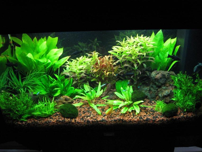 Rated #30: 35 Gallons Planted Tank - overview
