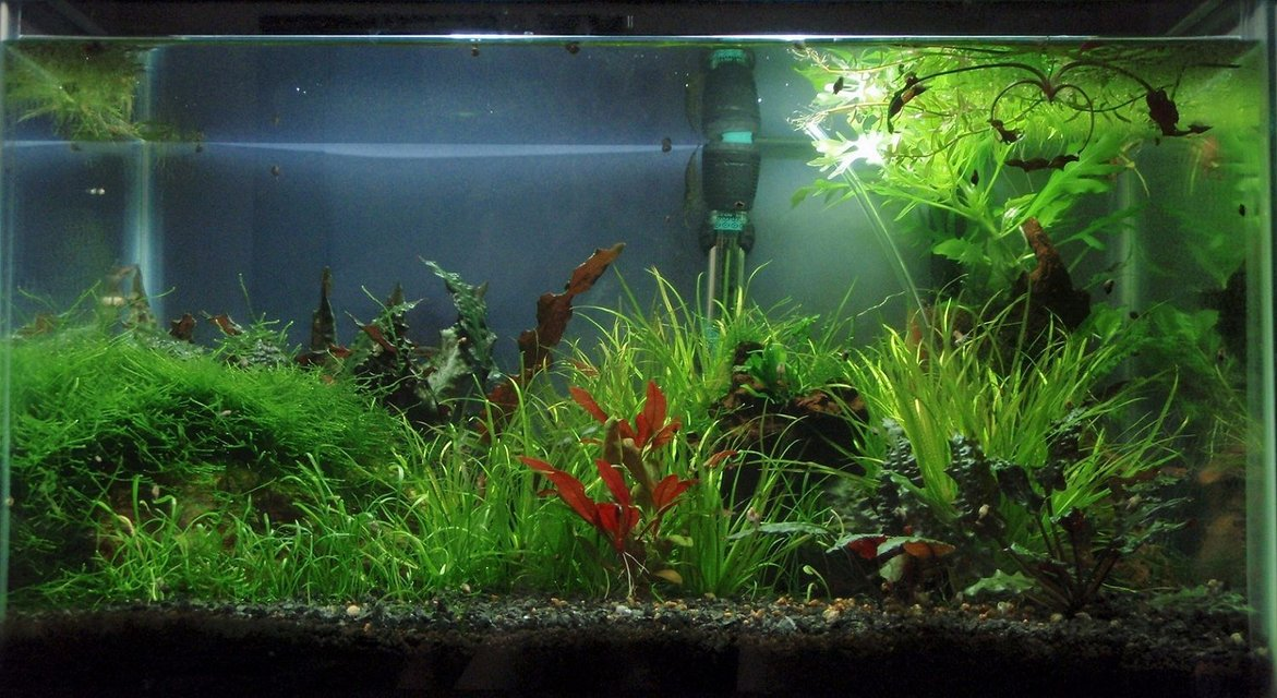 Rated #79: 10 Gallons Planted Tank - 10 gallon as it was a few months ago