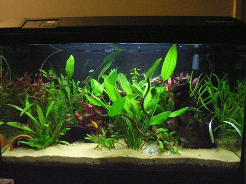 Rated #72: 36 Gallons Planted Tank - My 135l community tank