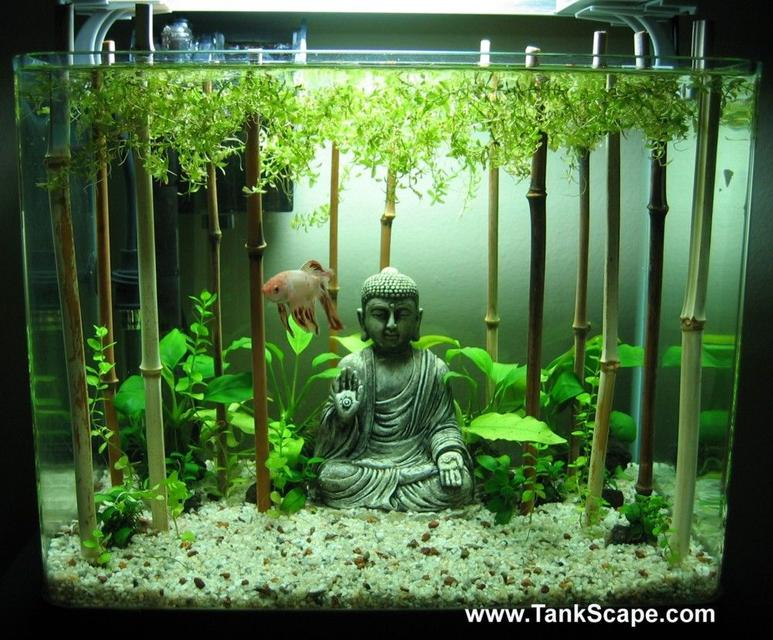 Rated #62: 4 Gallons Planted Tank - My Buddha Betta Tank