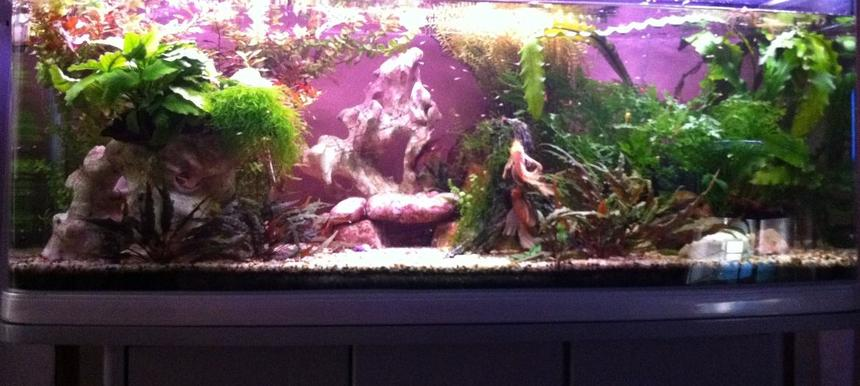 Rated #94: 60 Gallons Planted Tank - My 4 ft Display and Breeding Bristlenose Aquarium