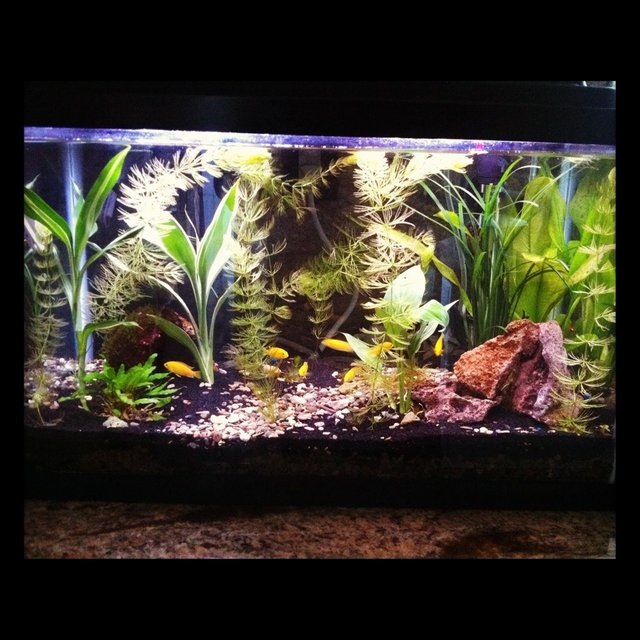 Rated #51: 60 Gallons Planted Tank - my planted tank ive had for 3 months