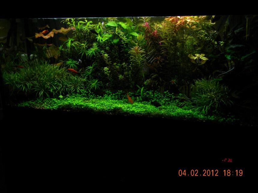 Rated #5: 76 Gallons Planted Tank
