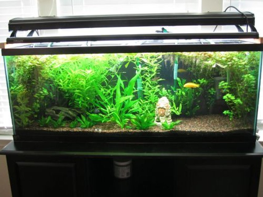 Rated #60: 60 Gallons Planted Tank - My growing jungle