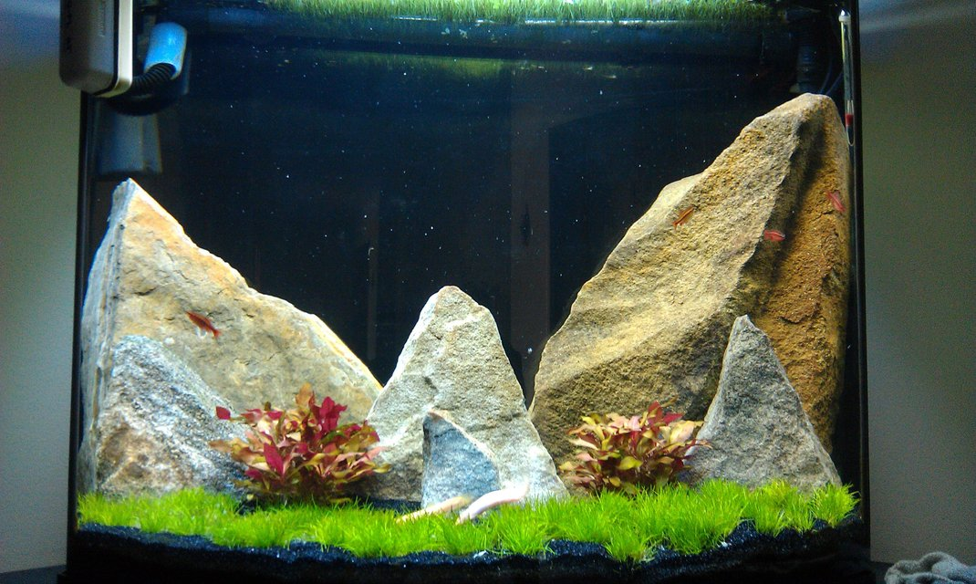 Rated #53: 27 Gallons Planted Tank - 5 months in
