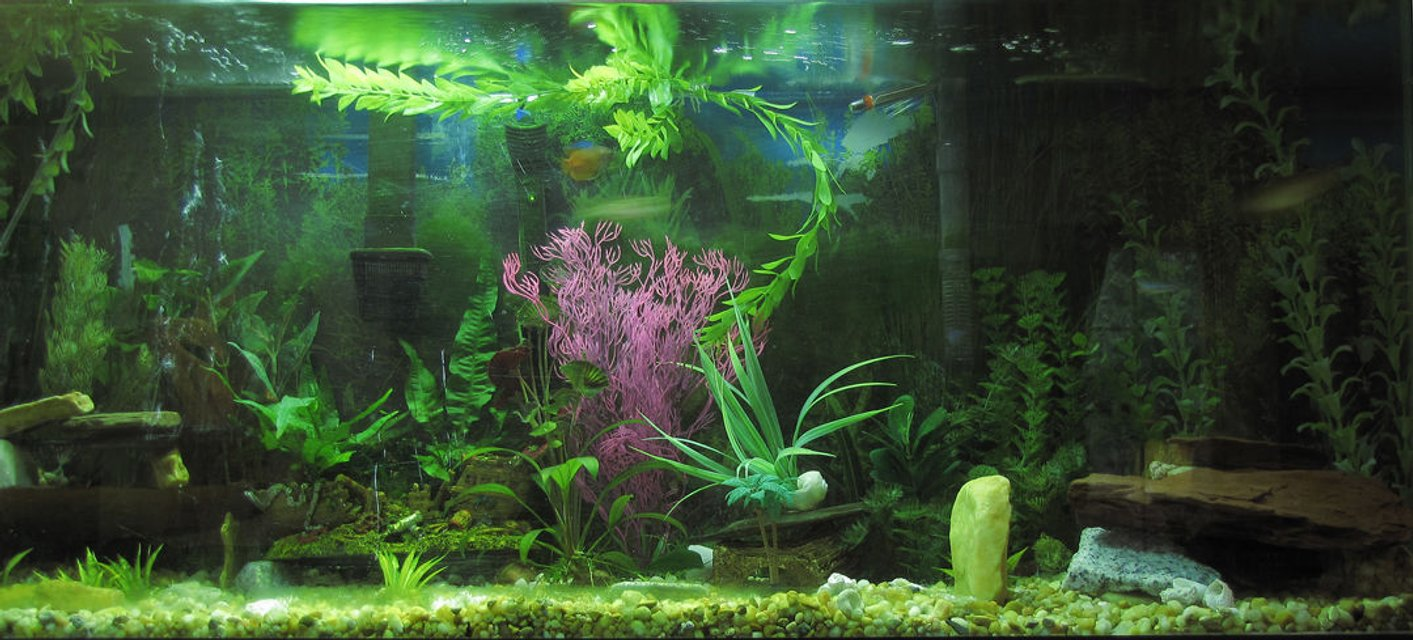 Rated #57: 55 Gallons Planted Tank