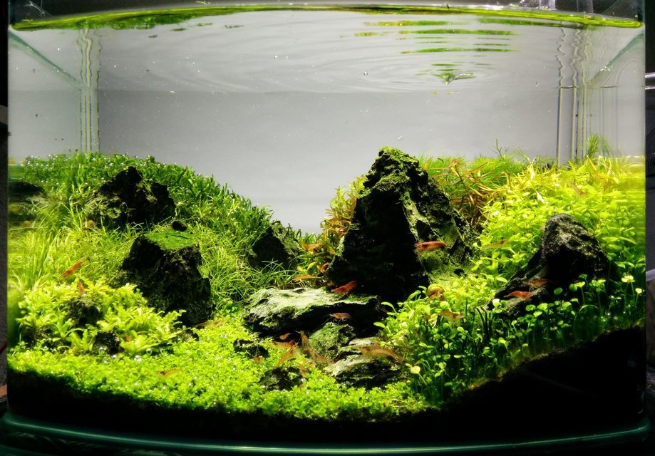 Rated #1: 3 Gallons Planted Tank - 9 months after establishment