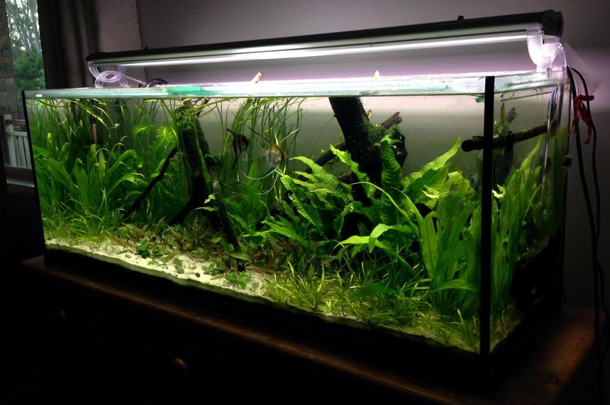 Rated #24: 55 Gallons Planted Tank - Planted 4 foot