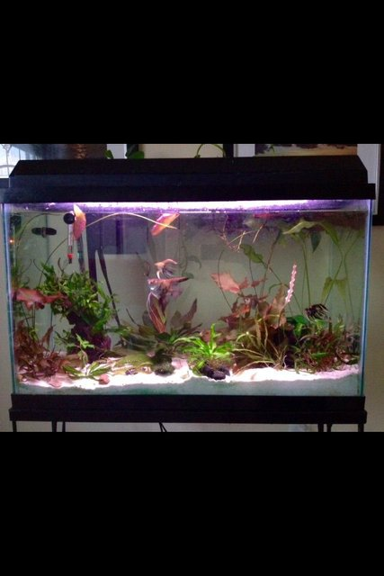 Rated #66: 29 Gallons Planted Tank