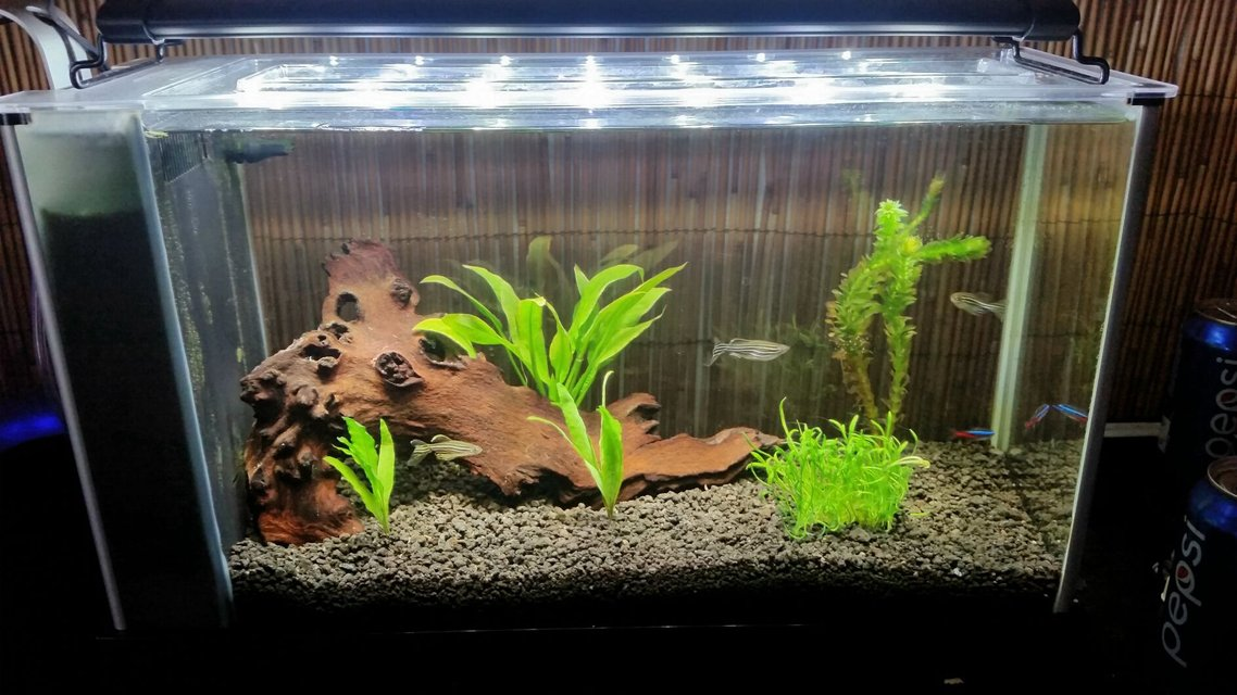 Rated #69: 5 Gallons Planted Tank - My tank