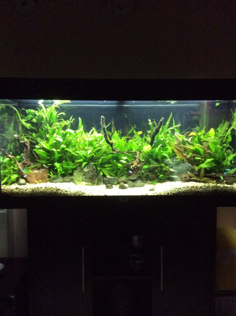 Rated #9: 45 Gallons Planted Tank - My tank
