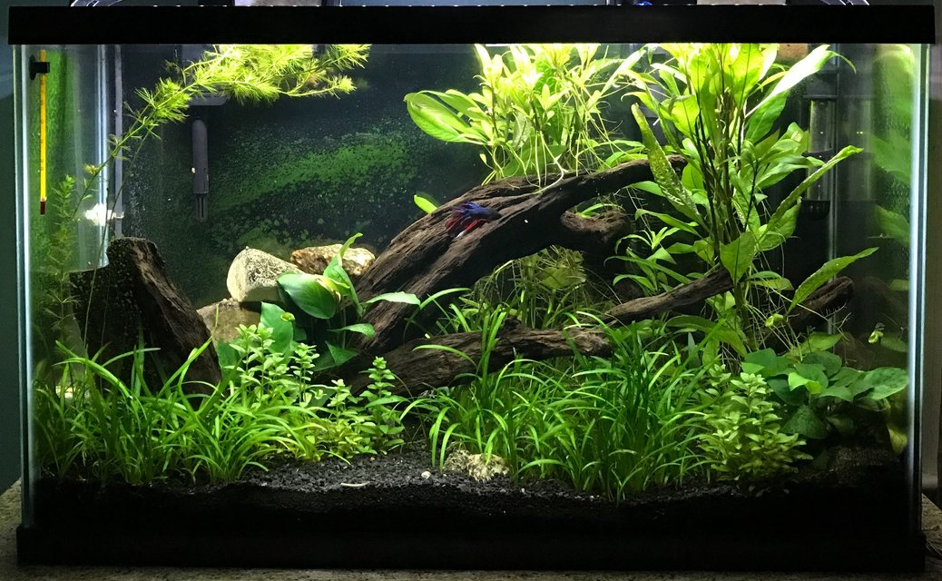 Rated #1: 29 Gallons Planted Tank - My Planted Aquarium