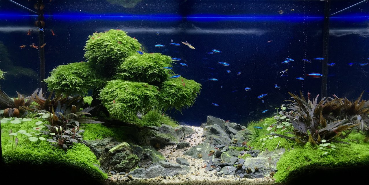 Rated #2: 33 Gallons Planted Tank - Green Pastures