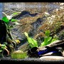 20 gallons planted tank (mostly live plants and fish) - Ram Tam Tam