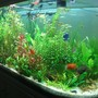 75 gallons planted tank (mostly live plants and fish) - my u tank
