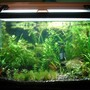 55 gallons planted tank (mostly live plants and fish) - 20 gallon