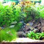 30 gallons planted tank (mostly live plants and fish) - Tank os of 08/01/08