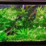 75 gallons planted tank (mostly live plants and fish) - 75 gallon co2
