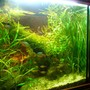 50 gallons planted tank (mostly live plants and fish) - 55 gallon planted tank