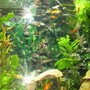 45 gallons planted tank (mostly live plants and fish) - Freshwater, Planted 45 gallon tank