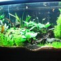 72 gallons planted tank (mostly live plants and fish) - my bowfront equiped with a new co2 system