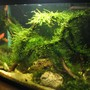 5 gallons planted tank (mostly live plants and fish) - .