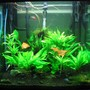 40 gallons planted tank (mostly live plants and fish) - Fluval Osaka 155
