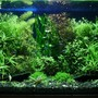 "29 gallons planted tank (mostly live plants and fish) - ""The dream of insane gardener"" bopoco@o2.pl"