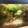 30 gallons planted tank (mostly live plants and fish) - planted tank