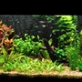 42 gallons planted tank (mostly live plants and fish) - my 45 gallon aquarium