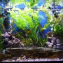 65 gallons planted tank (mostly live plants and fish) - 65 Gallon Planted Freshwater Community Tank