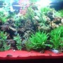 150 gallons planted tank (mostly live plants and fish) - Plants 95% live 5 % plastic various cichlids, red sand,mazanita wood, various porus bulk rock,assorted scavengers