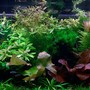 40 gallons planted tank (mostly live plants and fish) - 40 gallon Planted Tank