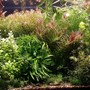 200 gallons planted tank (mostly live plants and fish) - Wild Amazon 3rd