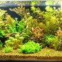 44 gallons planted tank (mostly live plants and fish) - Planted Tank