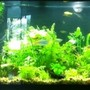 55 gallons planted tank (mostly live plants and fish) - Assorted plants(sword/java moss,etc.) Assorted Fish(platies/swordtails/angels/rainbows/ tetras/cleaners/snails/barbs)