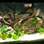 135 gallons planted tank (mostly live plants and fish) - 135 Gallon Planted with Custom Background