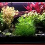 36 gallons planted tank (mostly live plants and fish) - Colourfull water garden