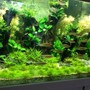 130 gallons planted tank (mostly live plants and fish) - New ...