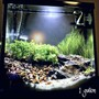 1 gallon planted tank (mostly live plants and fish) - 1 gallon