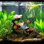 56 gallons planted tank (mostly live plants and fish) - 56 gallon column discus tank