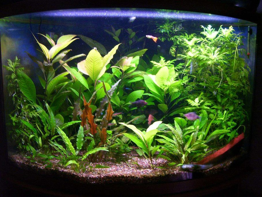 Puffer 39 S Planted Tanks Photo Id 9610 Full Version