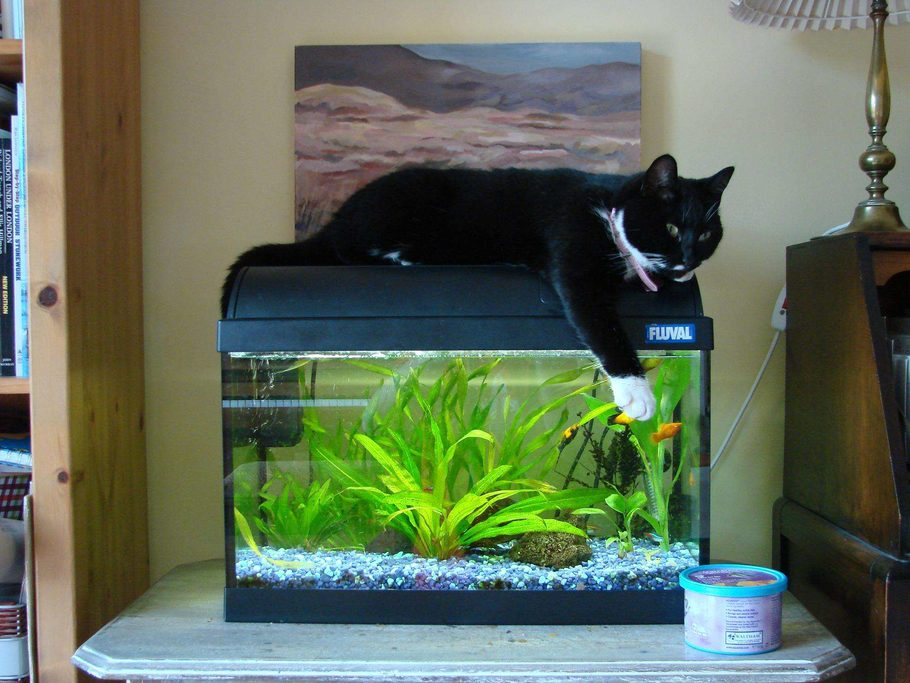 Clareeagle 39 s planted tanks photo id 12188 full version for 10 gallon fish tank decoration ideas