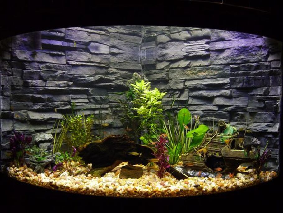 Debe3s Planted Tanks Details And Photos